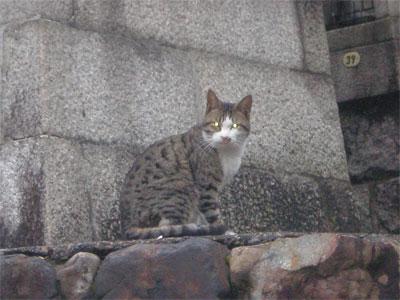 【写真: 稲荷山の猫】