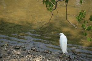図 奈良公園で見た鳥