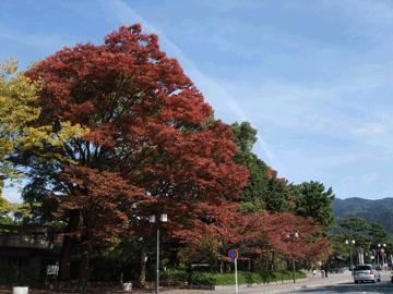 図 紅葉の京都