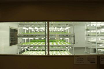 図 諏訪の植物工場